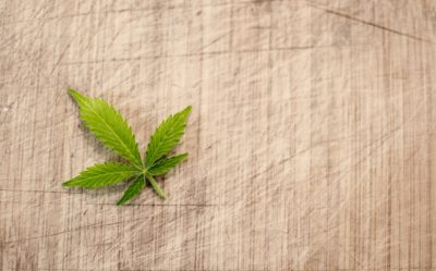 A single marijuana leaf on parchment paper